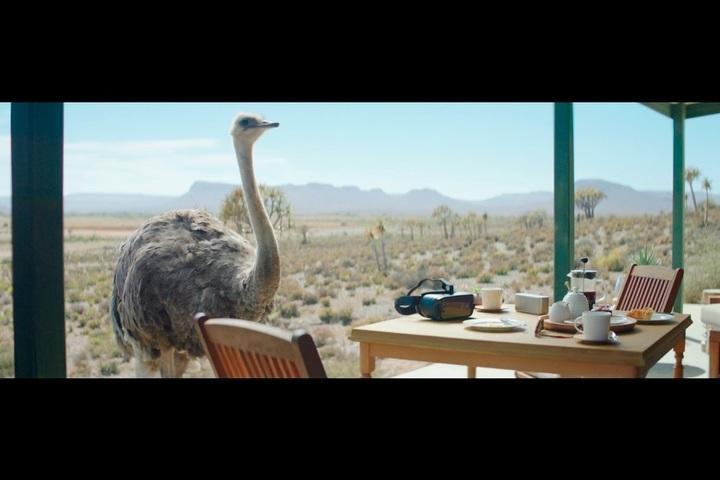 Ostrich - Samsung - Samsung