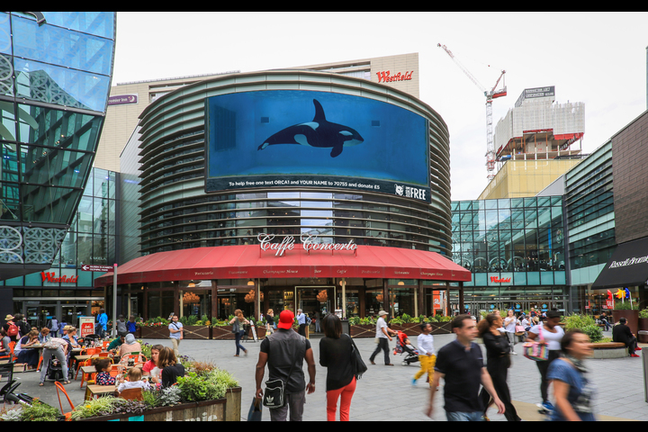 #TankFree - Born Free Foundation - World Orca Day