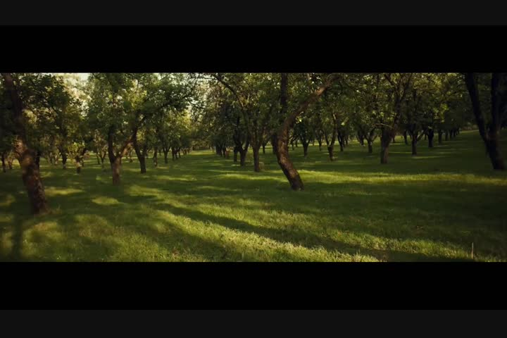 The Alchemy of The Orchard - Bulmers Cider - Bulmers