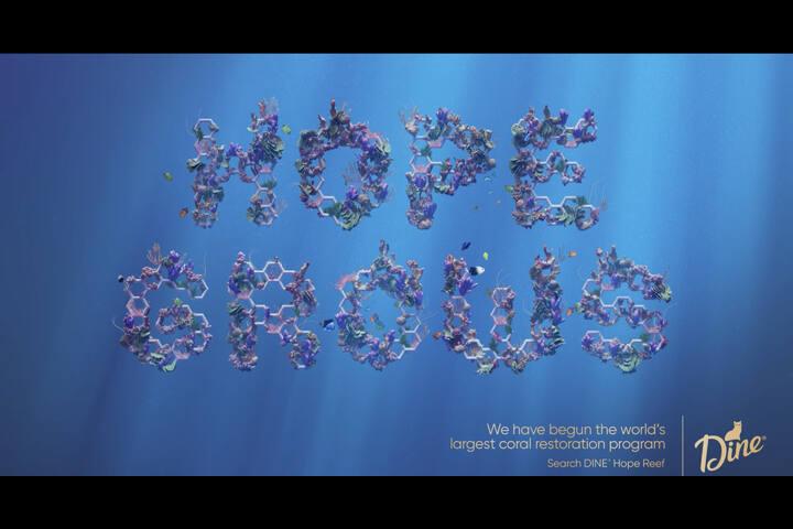 Hope Grows - The Wonder of Coral - Hope Grows - Sheba