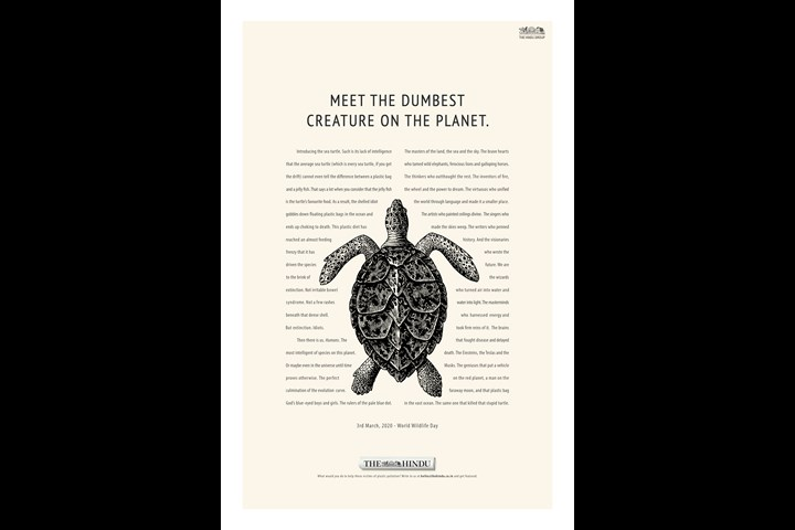 The Turtle - Publication - The Hindu - English Newspaper - The Hindu
