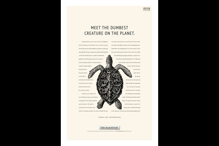 The Turtle - The Hindu - Publication - The Hindu - English Newspaper