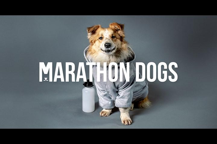 Marathon Dogs - ČSOB Bank Bratislava Marathon sponsorship - ČSOB Bank