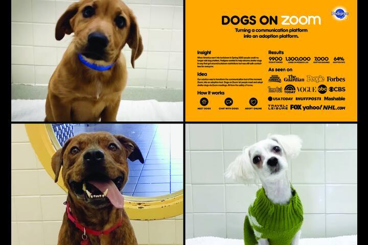 Dogs on Zoom - Pedigree - Pedigree