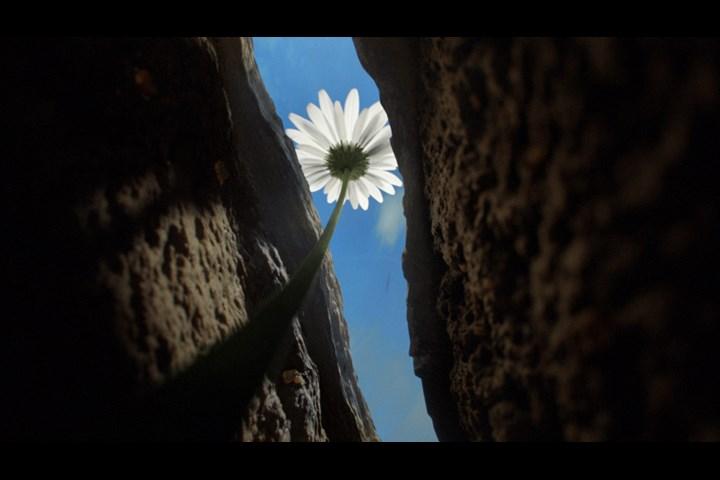 We Will Grow Again - Riff Raff - B&Q