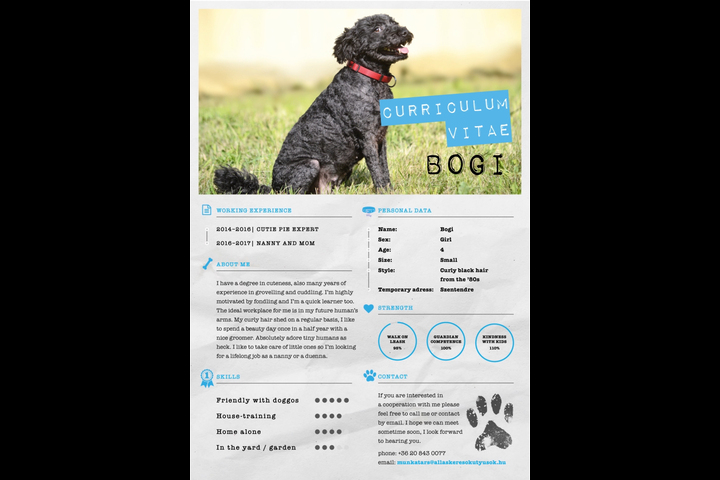 Jobseeker doggos - Telecommunication - Telenor