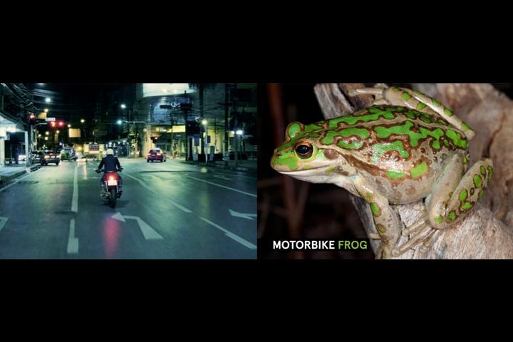 Frog ID - - Australian Museum