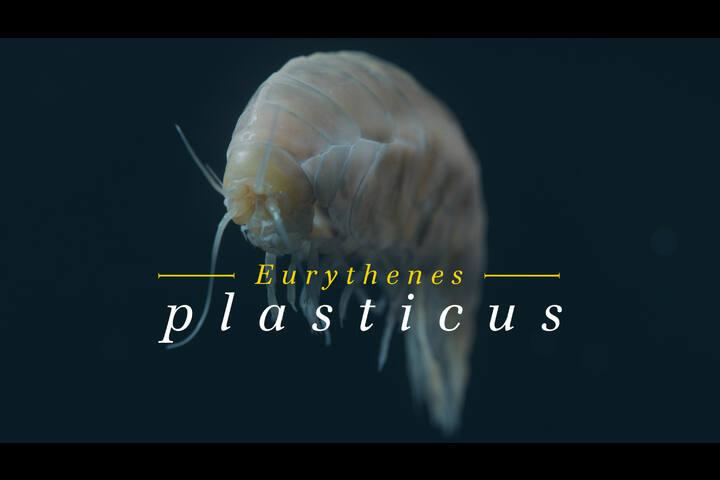 Eurythenes plasticus - A new species - WWF Germany