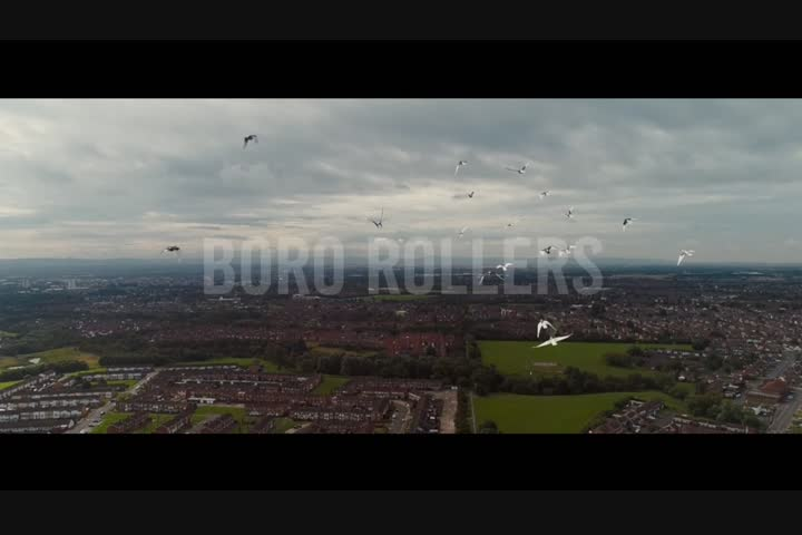 Molson Coors - Pigeons - Carling