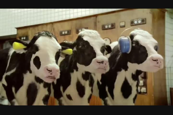 True Taste of Kerrygold - Dairy - Kerrygold