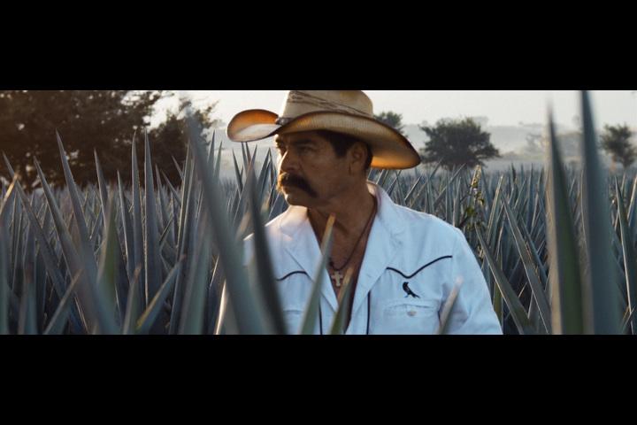 Celebration - Jose Cuervo - Jose Cuervo