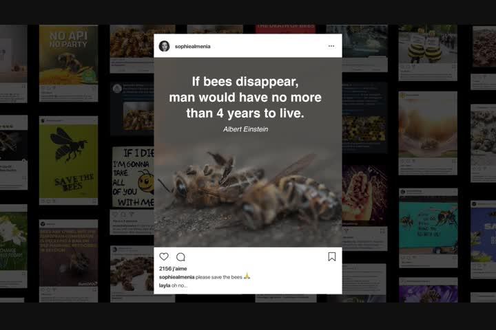 Bee_nfluencer - NGO - Fondation de France