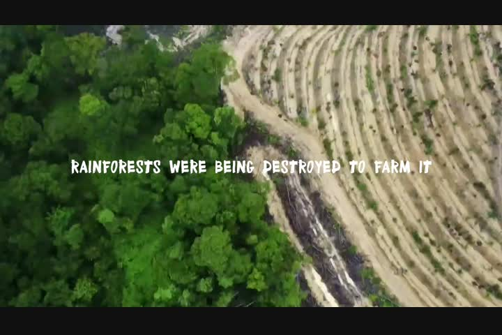 Rang-tan - Palm Oil Awareness - Greenpeace