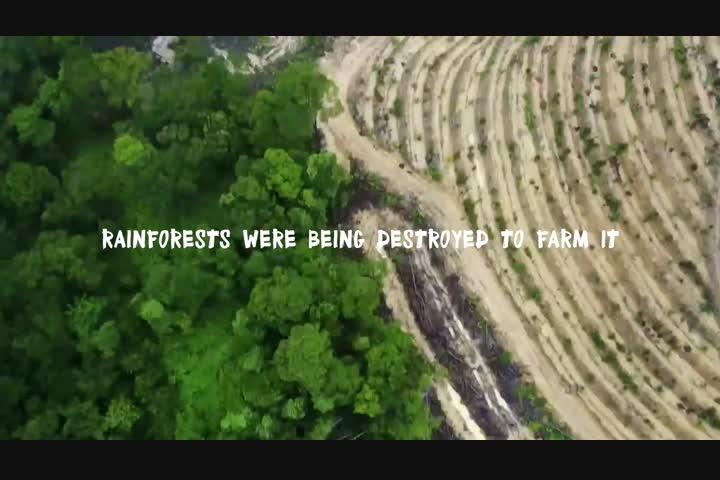 Rang-tan - Palm Oil Awareness - Greenpeace